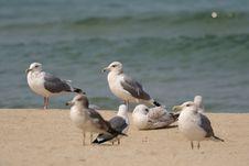 Free Bird, Gull, Seabird, Shore Royalty Free Stock Images - 135982859