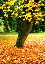 Free Autumn Leaves Royalty Free Stock Image - 1360816