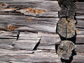 Free Wood Texture Royalty Free Stock Image - 1361666