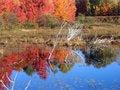 Free Autumn Lake Reflection Royalty Free Stock Photography - 1366627