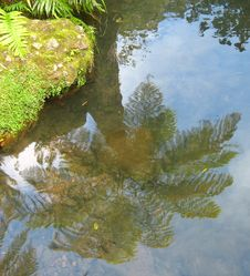 Free Stream Reflection Stock Image - 1360461