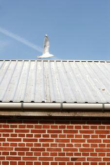 Free Bird Seagull Stock Image - 1361111