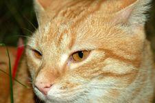 Free Cat 2 Royalty Free Stock Photo - 1361345