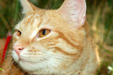Free Cat 4 Stock Images - 1361384