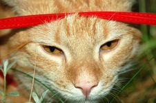 Free Cat 3 Royalty Free Stock Image - 1361436