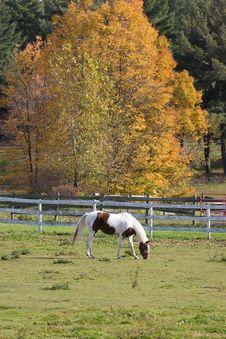 Free Horse Grazing Stock Photos - 1361743