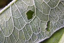 Free Frozen Green Leaf Stock Photography - 1362222