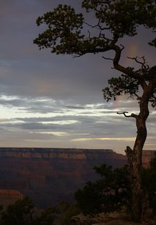 View Of The Grand Canyon With Tree And Rainbow Royalty Free Stock Images