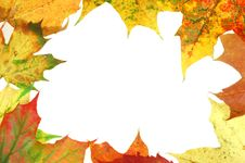 Free Leaves Frame 3 Stock Photo - 1362700