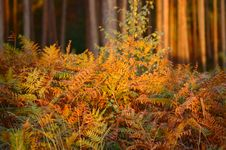 Free Ferns And Wood Royalty Free Stock Images - 1362819
