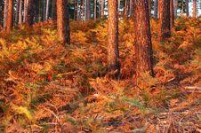 Free Sunset On Underbrush Stock Image - 1362831