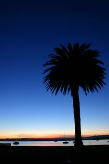 Palm Sunset Royalty Free Stock Image