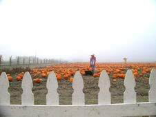 Free Pumpkin Patch Scarecrows With Wheelbarrow Stock Photos - 1364323