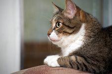 Senior Cat Stock Image