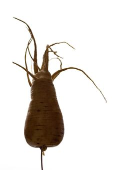 Free Freaky Parsnip Roots Stock Photo - 1365230