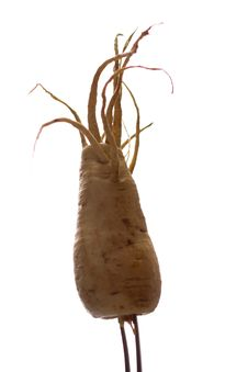 Freaky Parsnip Roots Royalty Free Stock Photography