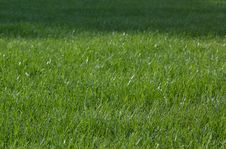 Free Green Grass Stock Photography - 1365832