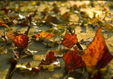 Autumn Leaves On Deck Royalty Free Stock Images