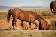 Free Two Horses Down In A Hole Stock Photos - 1366323