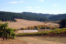 Free Vineyard In Autumn Royalty Free Stock Photography - 1366437