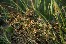 Free Larvas In Green Royalty Free Stock Image - 1367236