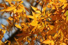 Free Autumn Glory Royalty Free Stock Photos - 1367848