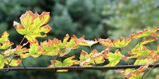 Free Autumn Glory Stock Photography - 1367872