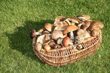 Free Mushrooms Basket Royalty Free Stock Photos - 1368238