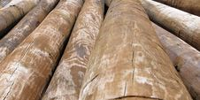 Free Log Pile Royalty Free Stock Photo - 1368995