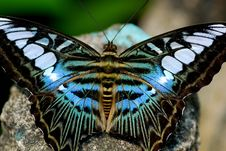 Free Colorful Butterfly Royalty Free Stock Photos - 1369278