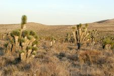 Free Desert Vegetation Royalty Free Stock Image - 1369646