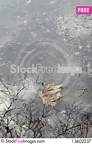 Free Old Autumn Leaf On Thin Spring Ice Royalty Free Stock Photography - 13602237