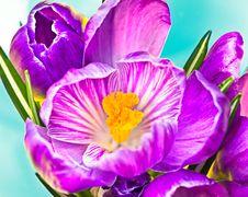 Flower Bloom Blossom Stock Image