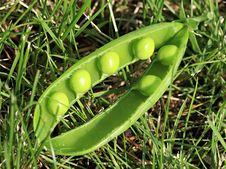 Free Peas Royalty Free Stock Photo - 13600355