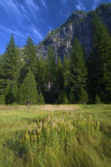 Free Yosemite Stock Images - 13600904