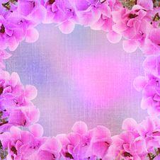Free Floral Frame - Pink Hyacinth Stock Image - 13603241