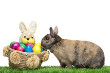 Free Easter Bunny In Meadow With Colorful Easter Egg Royalty Free Stock Image - 13604736