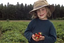 Young Girl Picking Strawberries Stock Photography
