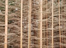 Free Trees Royalty Free Stock Photo - 13606395