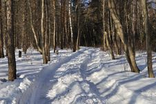 Free Snowy Road In Winter Forest Royalty Free Stock Photo - 13606465