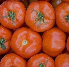 Free Tomatoes Stock Photography - 13606872