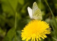 Free The Butterfly. Stock Images - 13606914