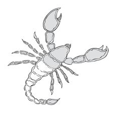 Black And White Scorpion Royalty Free Stock Images