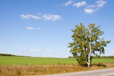 Free Lonely Tree Among The Fields Royalty Free Stock Photos - 13609048