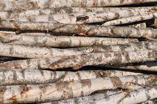Free Stack Of Birch Logs Royalty Free Stock Image - 13609316