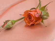 Free Red Rose Stock Images - 13609434