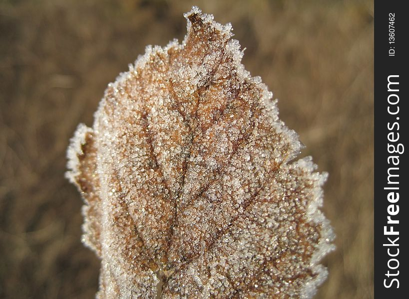 Frost on a leaf