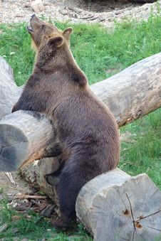 Free Brown Bear, Mammal, Bear, Fauna Stock Images - 136080714