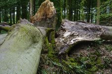 Free Tree, Woody Plant, Rock, Woodland Stock Image - 136080771
