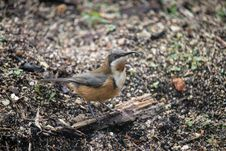 Free Bird, Fauna, Beak, Old World Flycatcher Stock Photography - 136080822